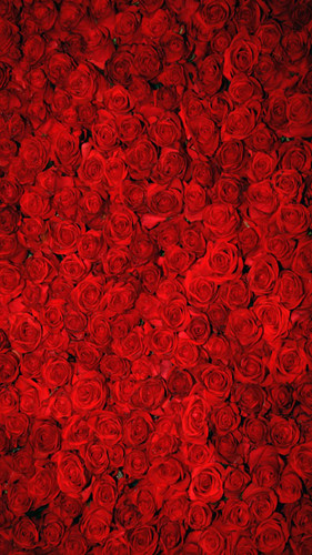 Bed of Roses Backdrop