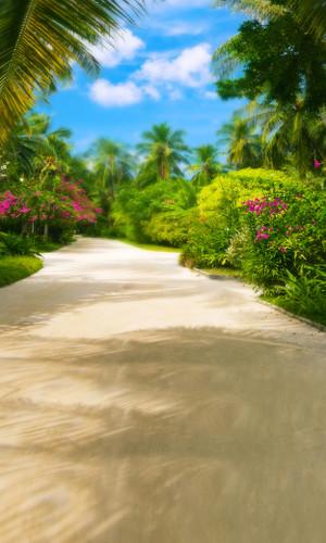 Tropical Fantasy Path Backdrop