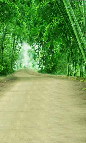 Bamboo Lined Road Backdrop