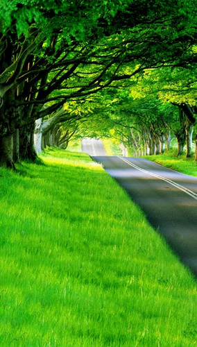Grassy Green Road Backdrop