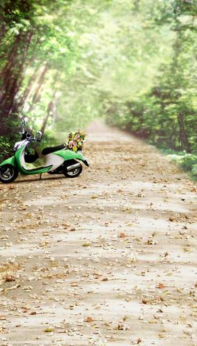 Leafy Green Road Backdrop