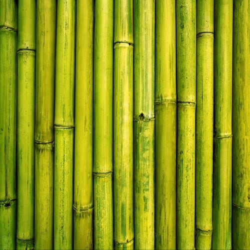 Green Bamboo Floor