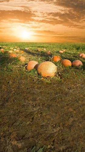 Pumpkin Sunrise Backdrop