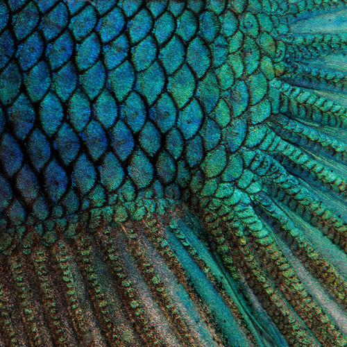Bird Feather Floor