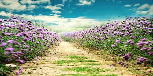 Flower Trail Wide Format