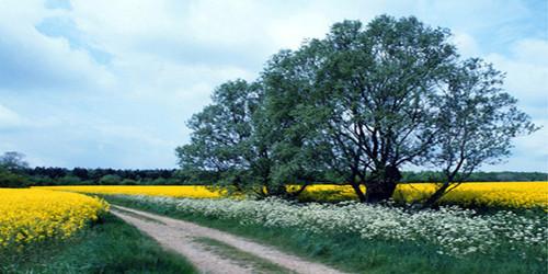 Grassy Road Wide Format