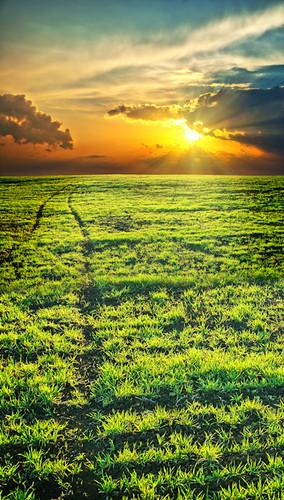 Sunset Field Backdrop
