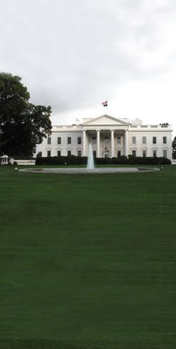 White House Lawn Backdrop