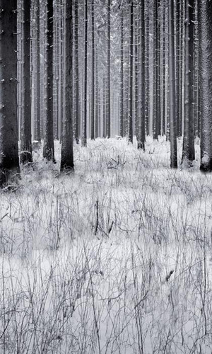 Winter Forest Backdrop