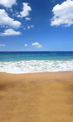 Seaside Rendevous Backdrop