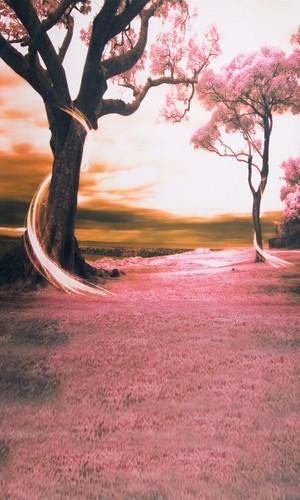 Rose Colored Dream Backdrop