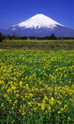 Fuji Flowers Backdrop