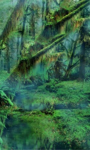 Swampland Backdrop