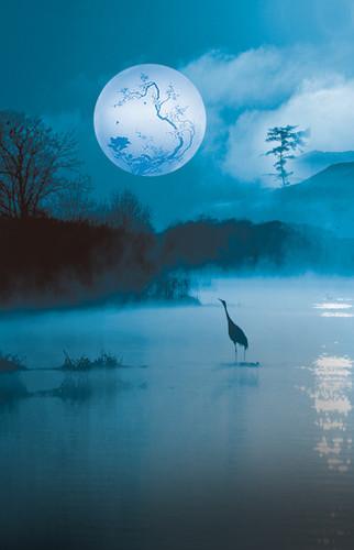 Misty Midnight Pond Backdrop