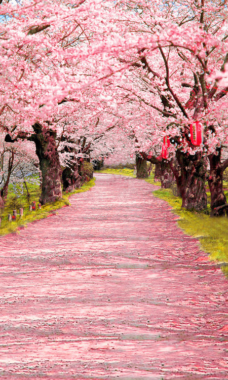 Cherry Blossom Aisle Backdrop Photo Pie