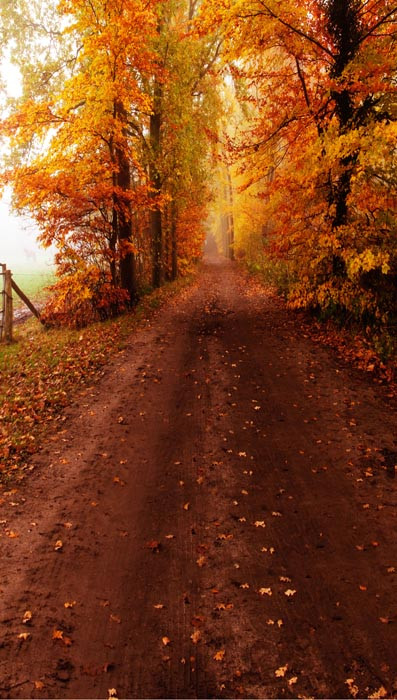 Autumn Dirt Road Backdrop Photo Pie