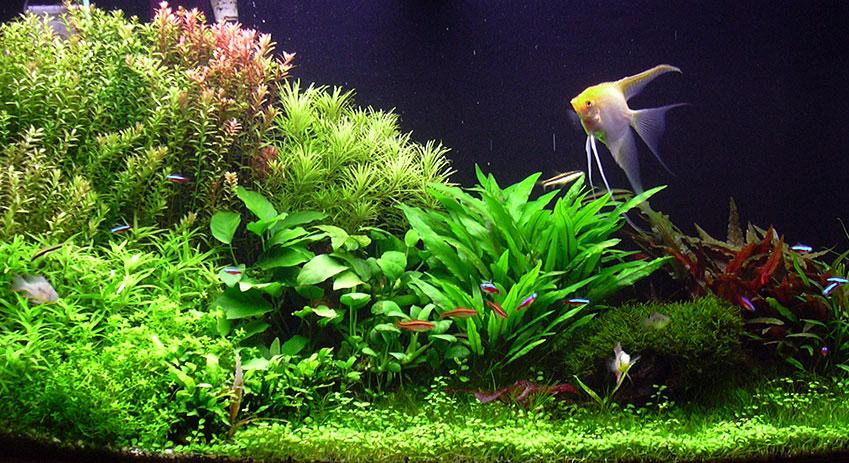 Planted Aquarium Gallery | Green Leaf Aquariums