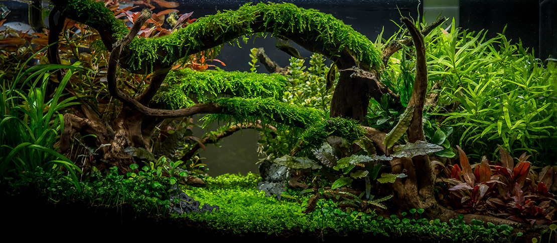Planted Aquarium Gallery Green Leaf Aquariums