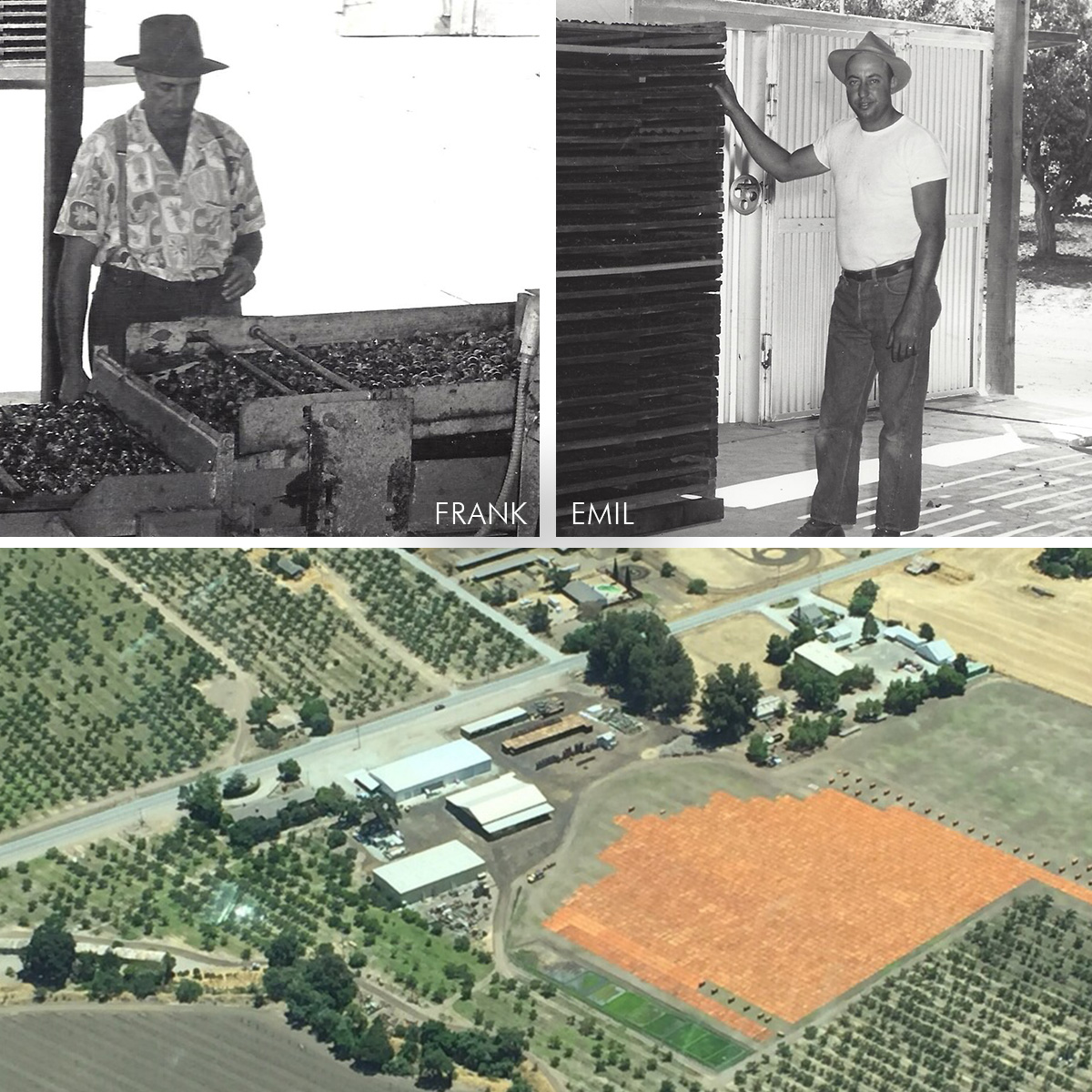 B & Farms history - dried blenheim apricot growers