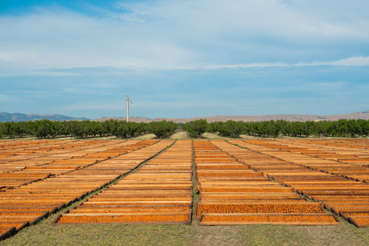 Best Dried Fruit Drying Yard