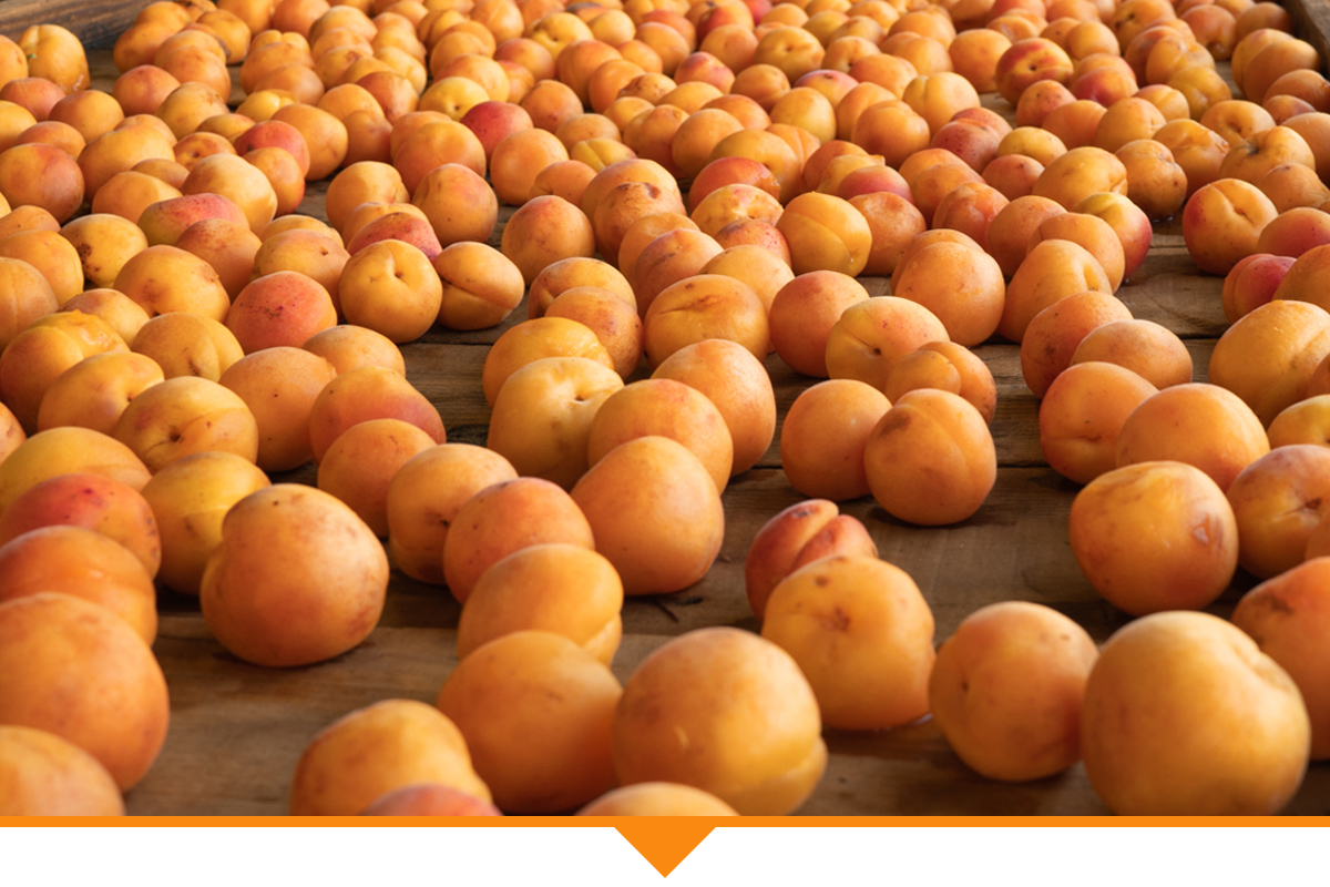 Buy wholesale dried fruit online. Bulk dried apricots.