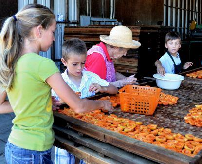 Fifth generation enjoying blenheim apricots