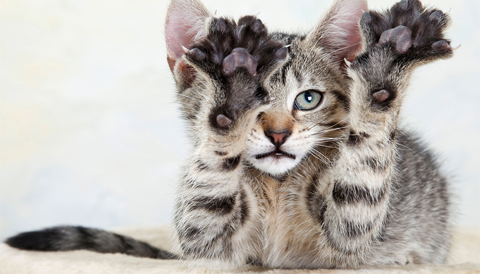 The Purrdy Paws Alternative to Declawing - Purrdy Paws