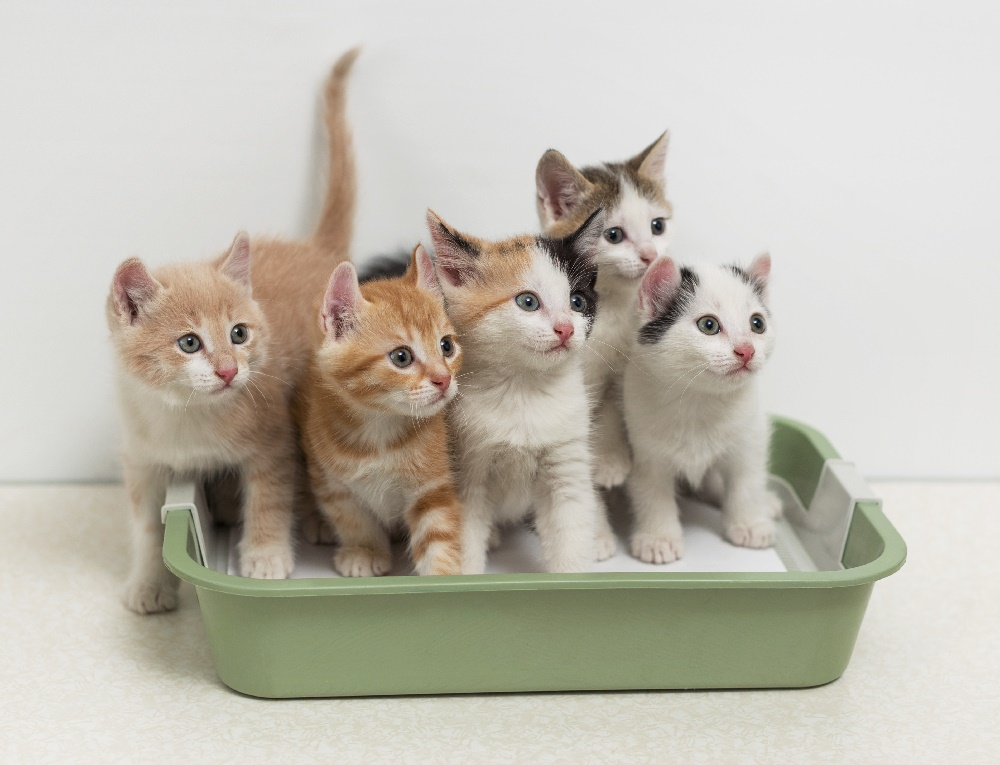Ultimate Litter Box Guide by Purrdy Paws