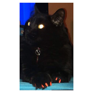 Black The Cat Purrdy Paws Hall Of Fame Orange Soft Nail Caps