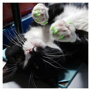Chase The Cat Purrdy Paws Hall Of Fame Glow In The Dark Soft Nail Caps