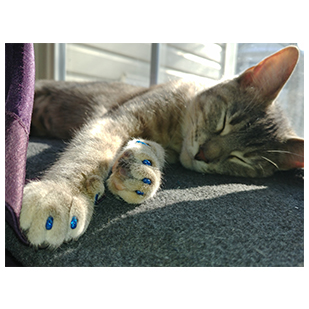 Christine the Cat Purrdy Paws Hall of Fame Blue Glitter Nail Caps