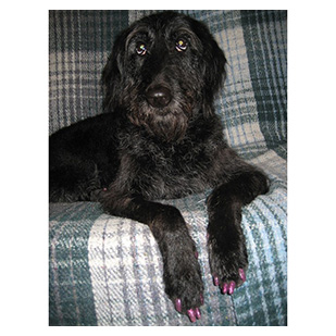 Doodlebug The Dog Purrdy Paws Hall Of Fame Pink Glitter Soft Nail Caps