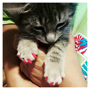 Fergie The Cat Purrdy Paws Hall Of Fame Hot Pink Soft Nail Caps
