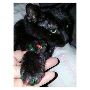 Gabbi The Cat Purrdy Paws Hall Of Fame Christmas Glitter Combo Soft Nail Caps