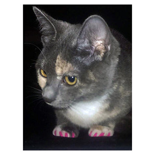Glitch The Cat Purrdy Paws Hall Of Fame Lipstick Pink Soft Nail Caps