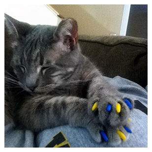 Gus The Cat Purrdy Paws Hall Of Fame Yellow And Blue Michigan Wolverines Soft Nail Caps