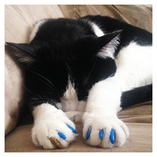 Jasper The Cat Purrdy Paws Hall Of Fame Blue And Gold Glitter Soft Nail Caps