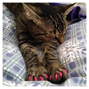 Little Lucy Liu The Cat Purrdy Paws Hall Of Fame Hot Pink Soft Nail Caps