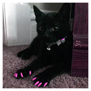 Mr Thackery Binx The Cat Purrdy Paws Hall Of Fame Hot Pink Soft Nail Caps