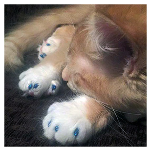 Owen Alexander The Cat Purrdy Paws Hall Of Fame Blue Glitter Soft Nail Caps