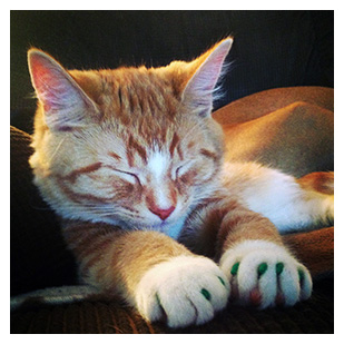 Ricky The Cat Purrdy Paws Hall Of Fame Green Soft Nail Caps