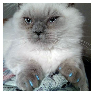 Stumpy The Cat Purrdy Paws Hall Of Fame Sky Blue Soft Nail Caps