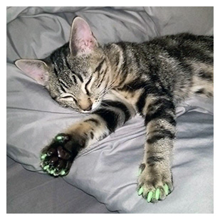 Wiggles The Cat Purrdy Paws Hall Of Fame Glow In The Dark Soft Nail Caps
