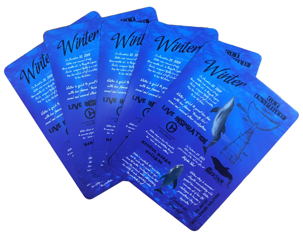 Winter Dolphin Facts Playing Cards