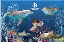 Clearwater Marine Aquarium Resident Animal Collage Poster