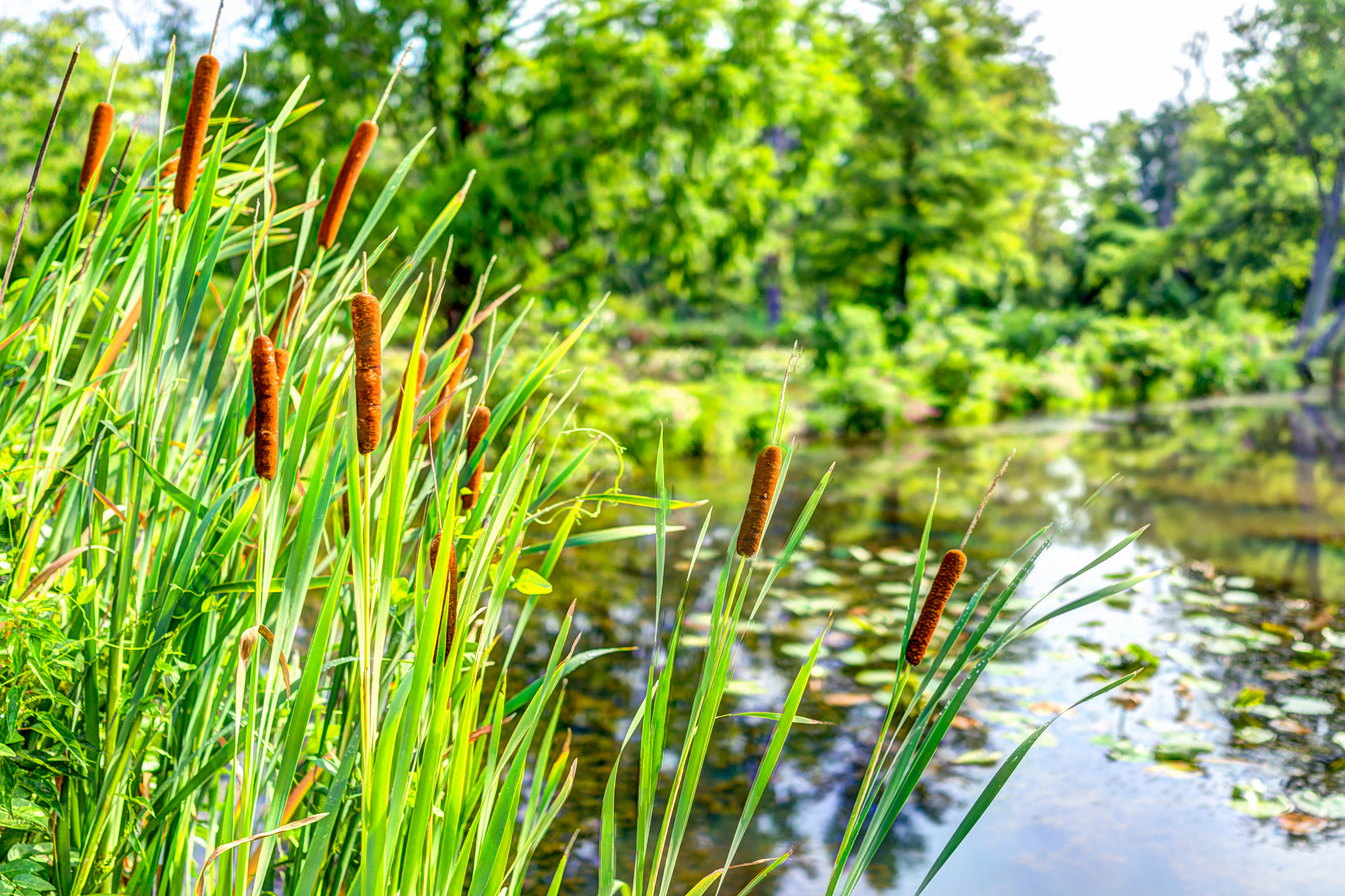 Bare Root Plants Are The More Economical Choice In Landscaping