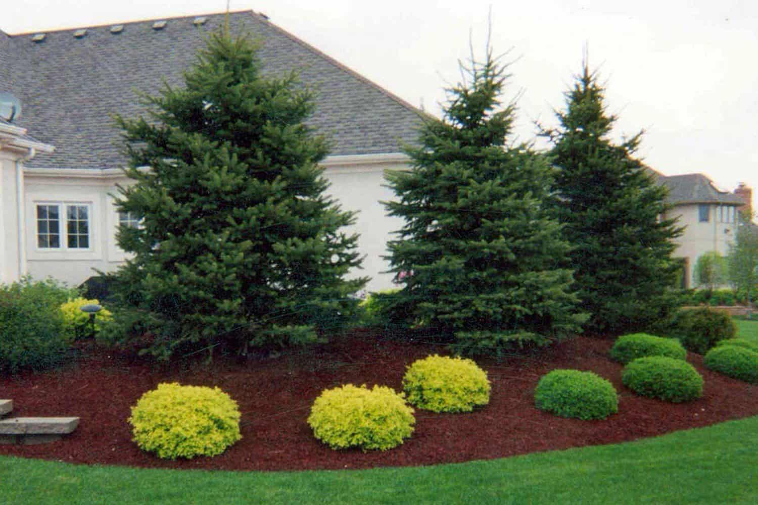 Image result for evergreens in landscaping