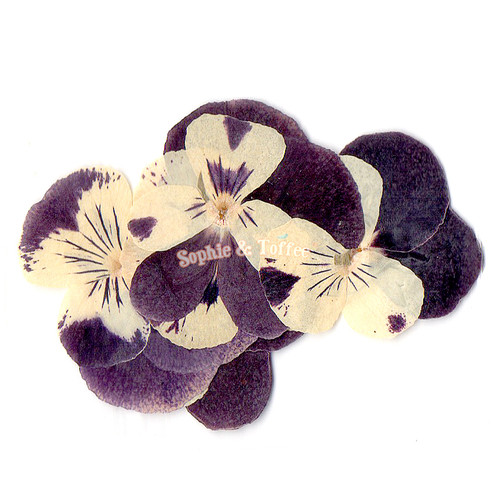 Viola Flower Pressed Real Dried Flowers (5 pieces)
