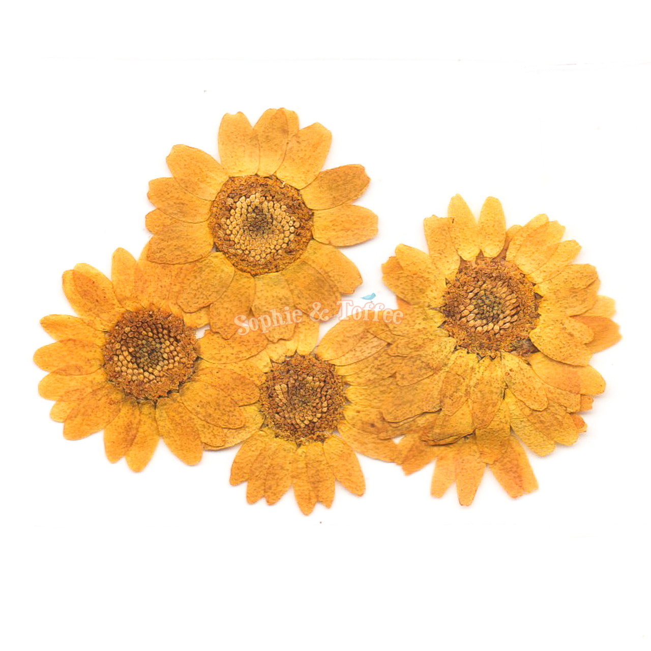 Yellow Daisy Flower Pressed Dried Real Flowers Pressed Flower