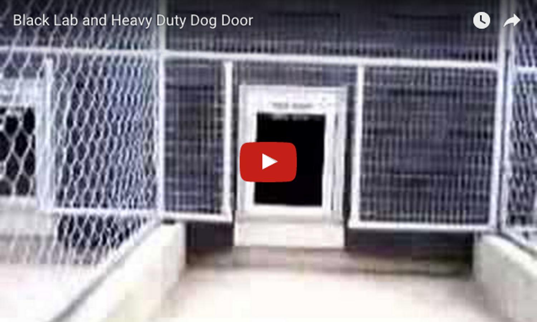 VIDEO: Heavy Duty Dog Door in Action!